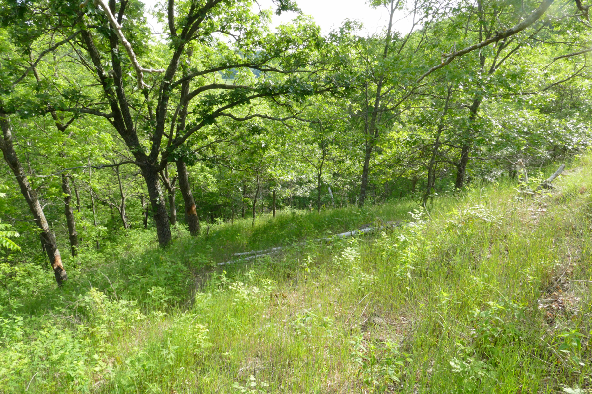 Planting Under Elm Trees : Click here for a list of all the native plants i ve found growing on