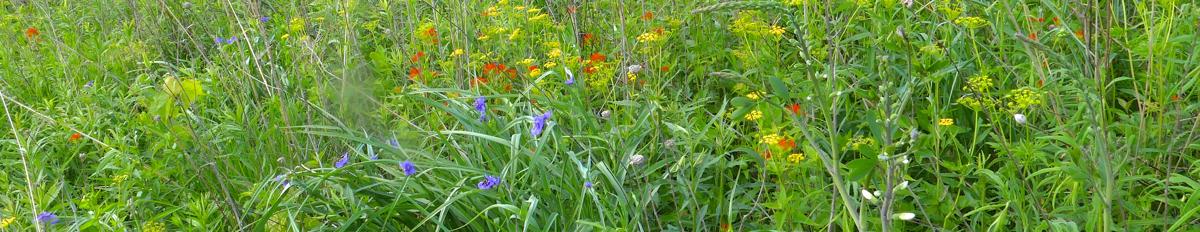 western prairie plants