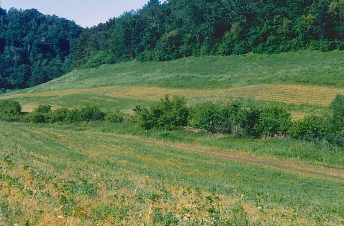 summer 2001 mowing center valley prairies