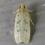 Family Glyphidoceridae