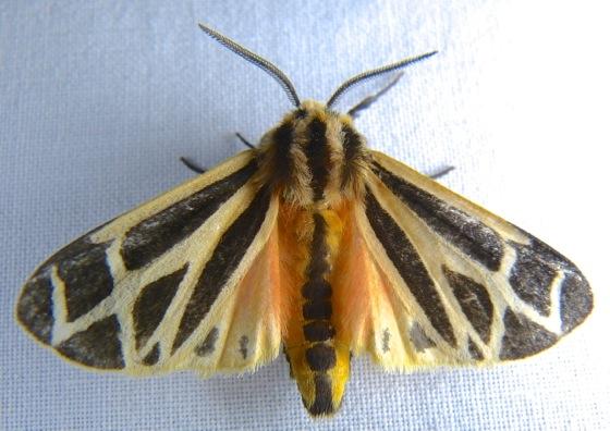 Yaeger Valley Moths Prairie Haven