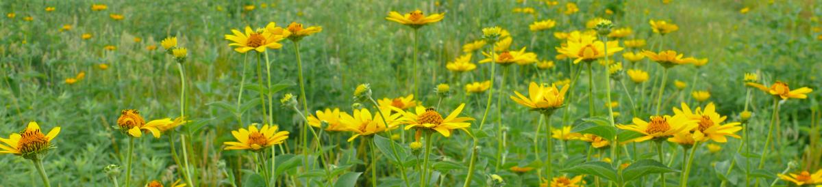 seed list photo 7-6-08