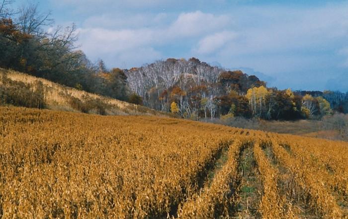 fall 2000 pats prairie 1