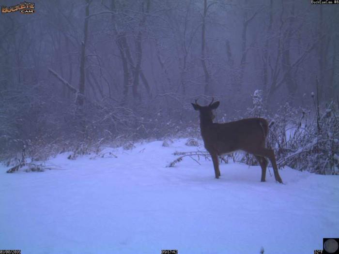 1-8-16 deer