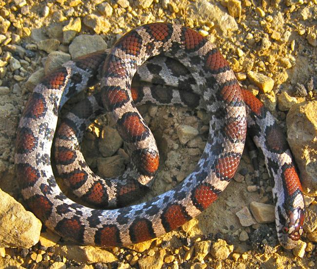 Snakes Prairie Haven