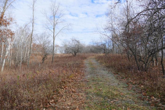Hidden Oaks path - before
