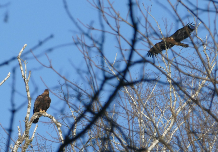 two eagles 11-29-14