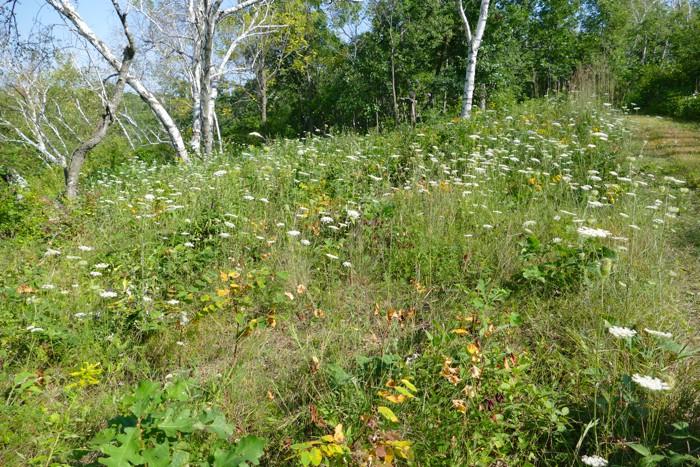 8-15-14 1 before weeding