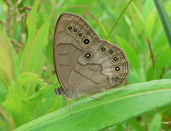 appalachian brown 7-11-06