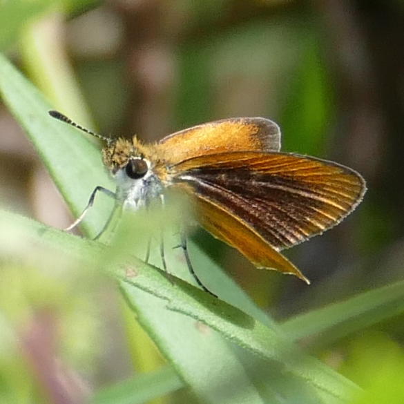 least skipper 9-7-14 2