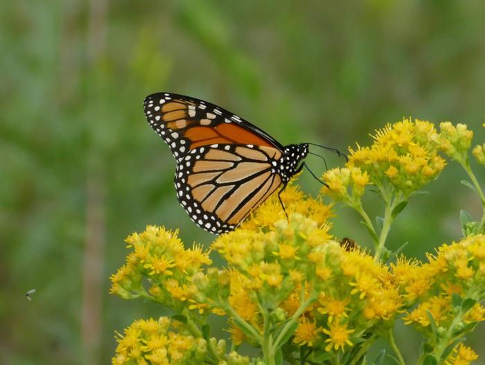 monarch 8-31-14