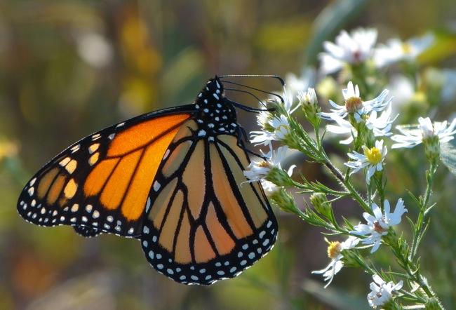 monarch 9-29-12