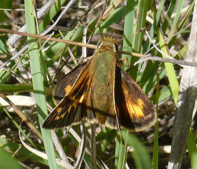 Leonards Skipper 8-30-09 1
