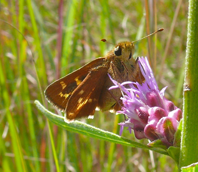 Leonards Skipper 8-30-09 2