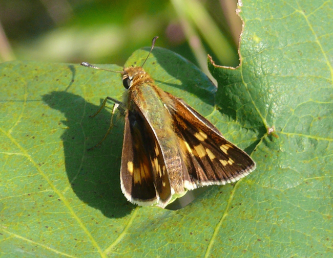 leonards skipper 9-1-11 8