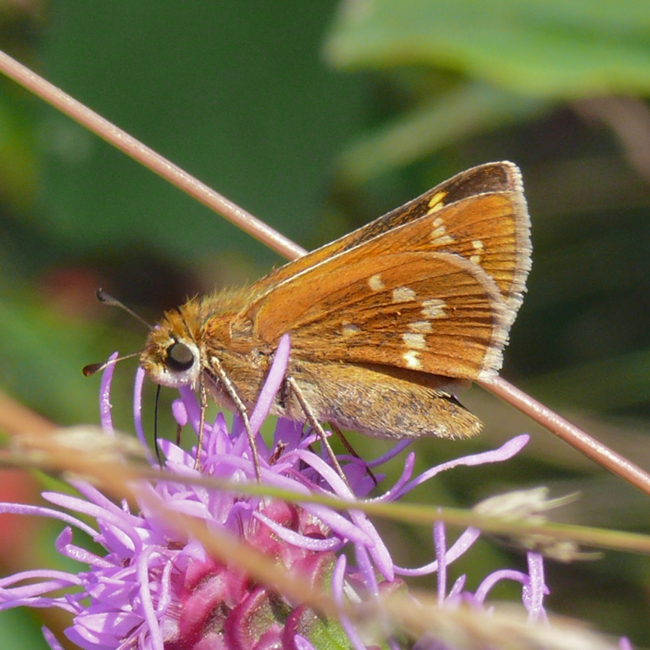 leonards skipper 9-1-11 9