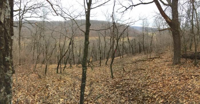Braehm Valley Prairie 4-5-15 3