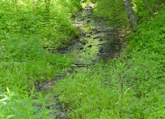 Cabin Creek 1