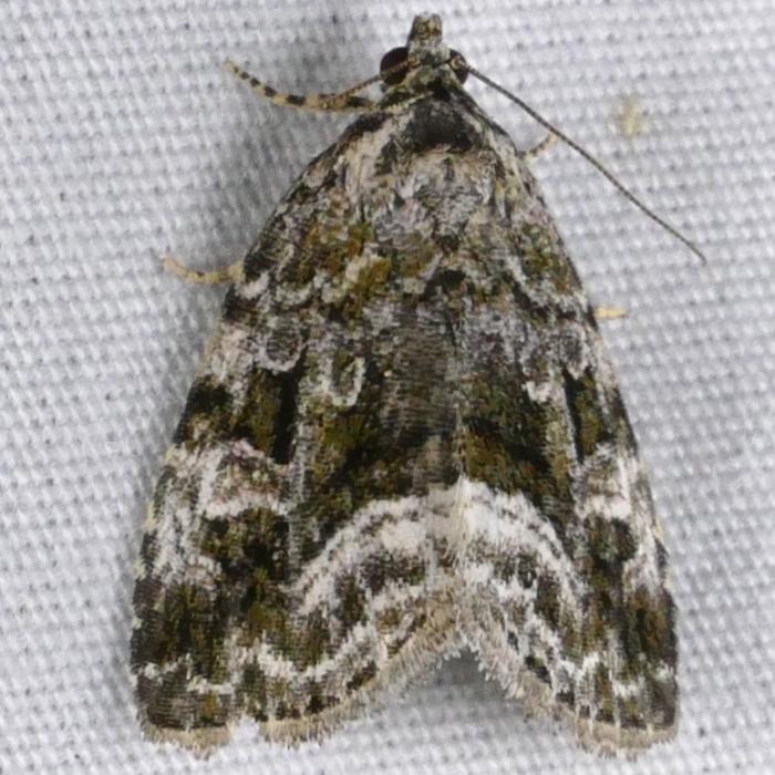 2015 Moth Party Prairie Haven