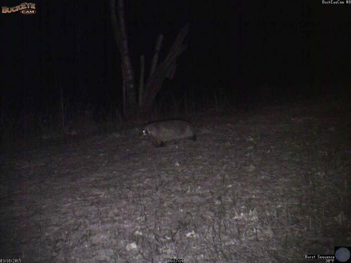 3-18-15 2 badger