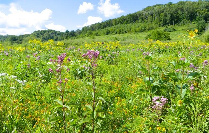 parsnip meadow 4
