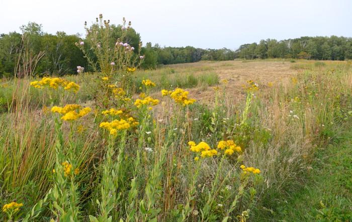 Narrows Prairie mowing