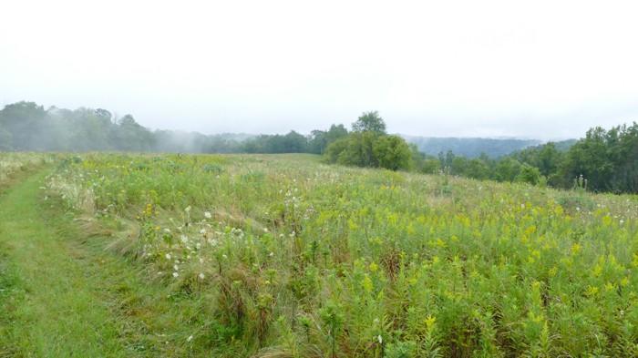 misty morning on Buffalo Ridge