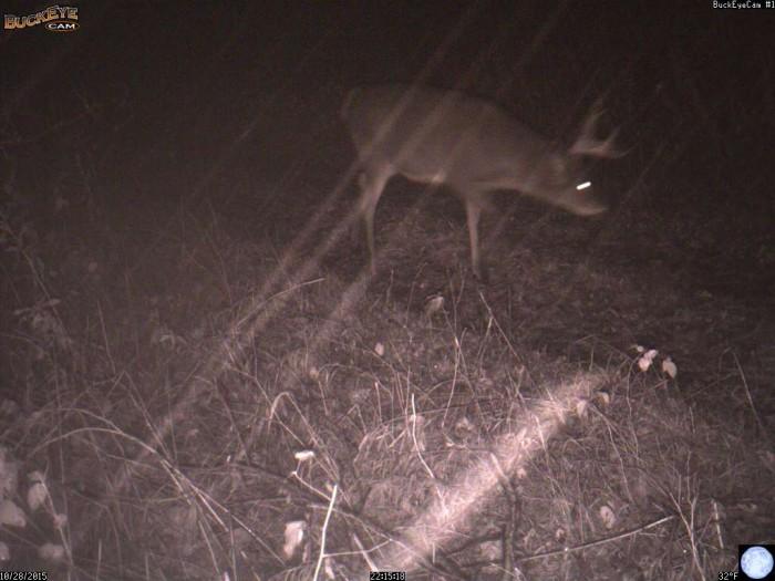 10-28-15 deer