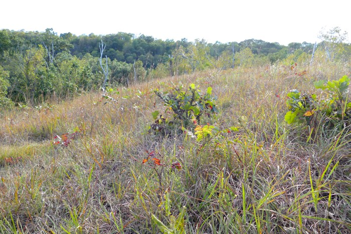 Hidden Oaks Prairie