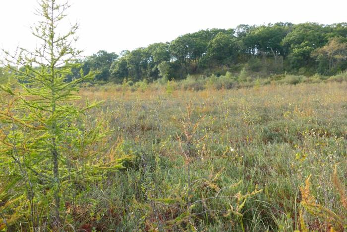 bog with savanna