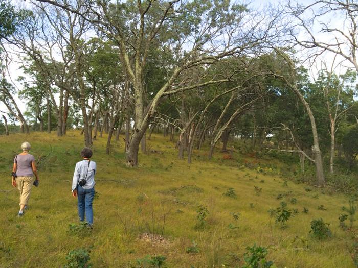 savanna 10