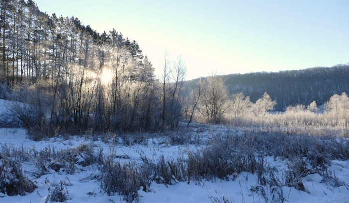 frost on the pines