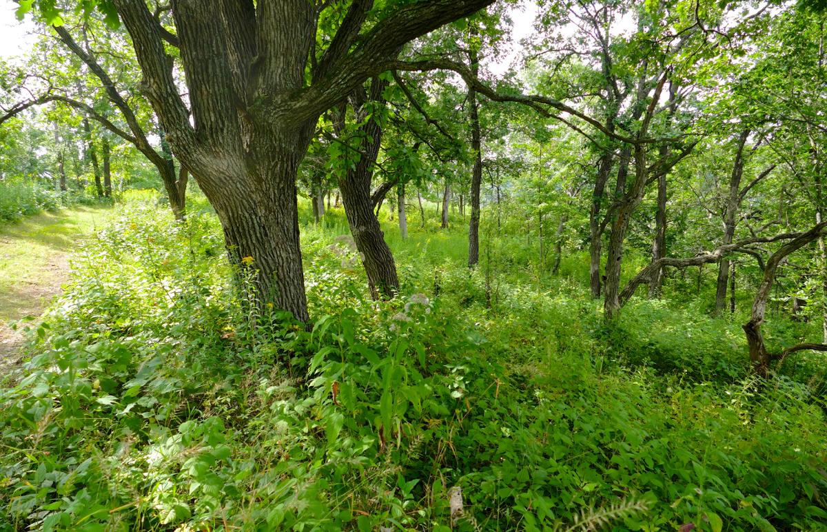 indian-grass-savanna-8-10-16-1