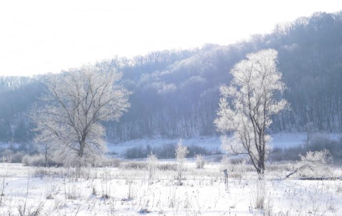 frost in wetland