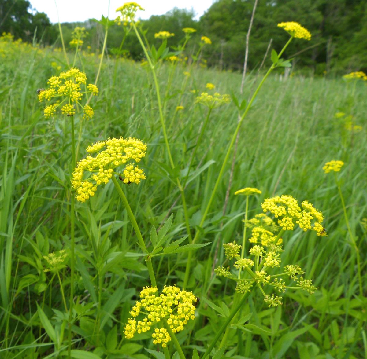 native plants for gardens � prairie haven
