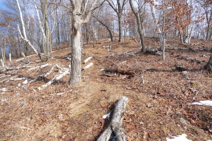 indian grass path 2-21-16