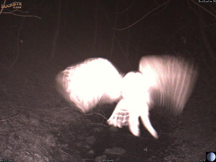 4-15-16 owl 2