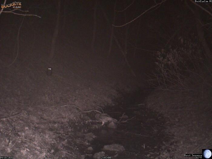 4-18-16 1 owl