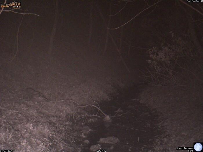 4-23-16 1 owl