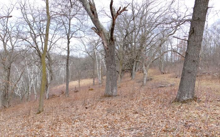 Indian grass savanna with piles