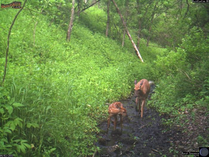 6-2-16 1 deer