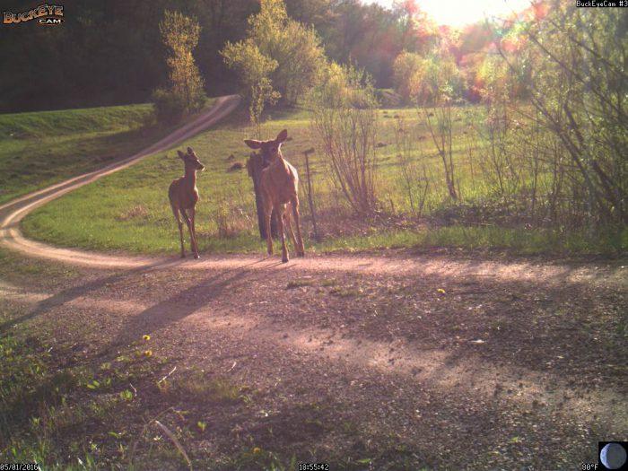5-1-16 deer