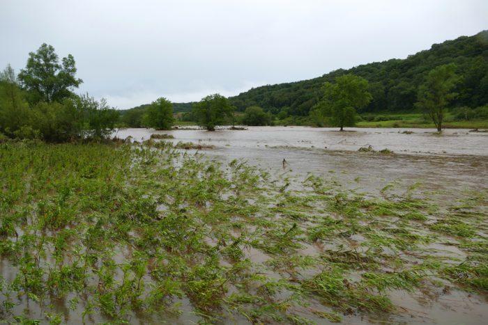 flood 12