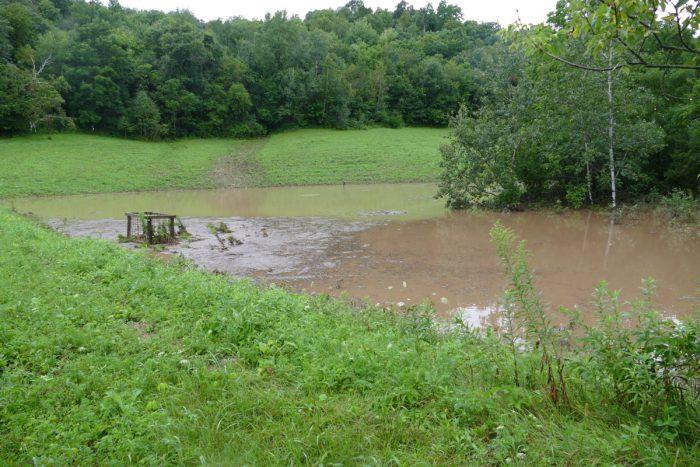 flood - frog pond