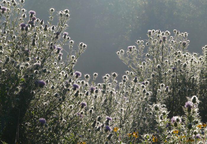 misty plants 2