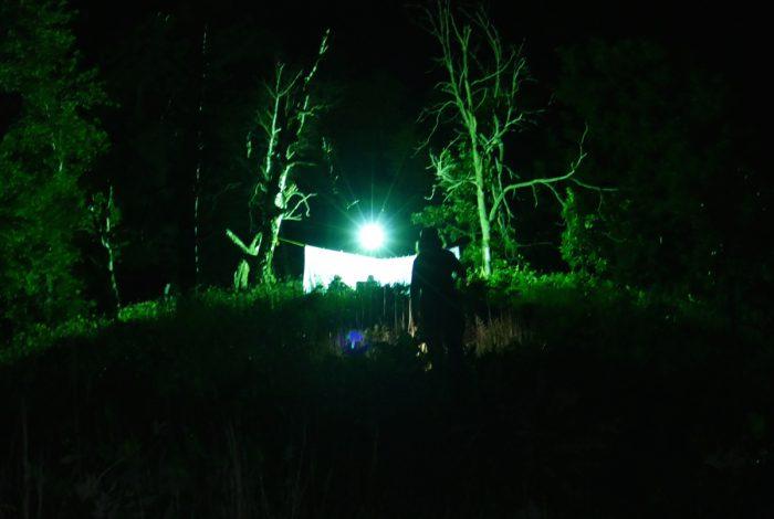 moth sheet on indian grass point