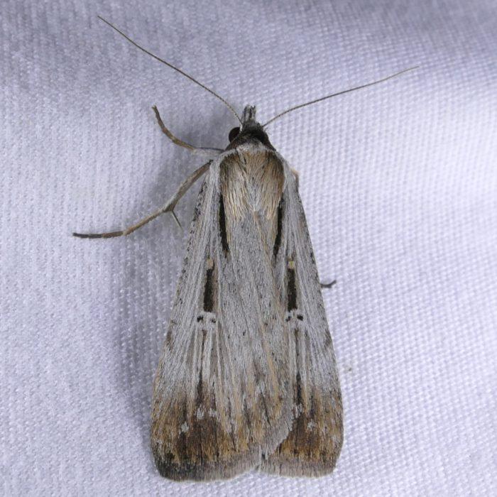 tathorhynchus-exsiccata-9-28-16-1