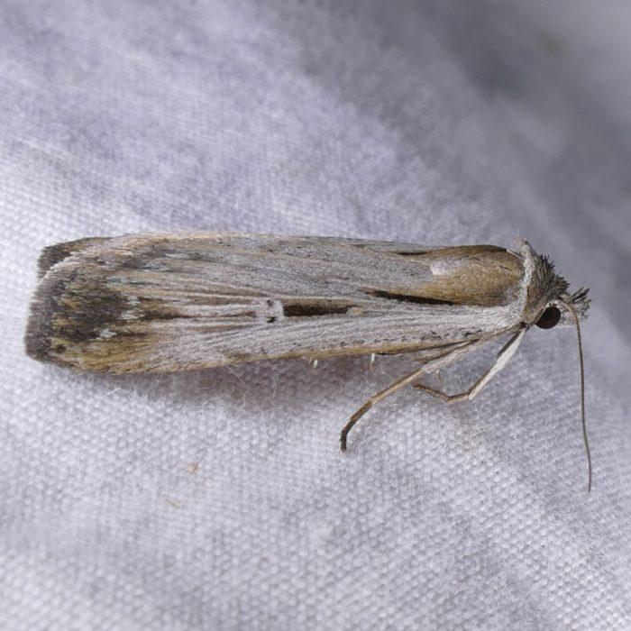 tathorhynchus-exsiccata-9-28-16-2