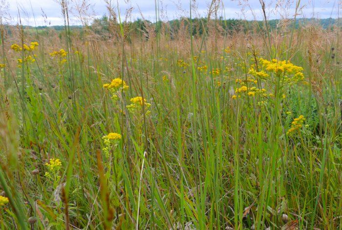 western prairie flowers 2