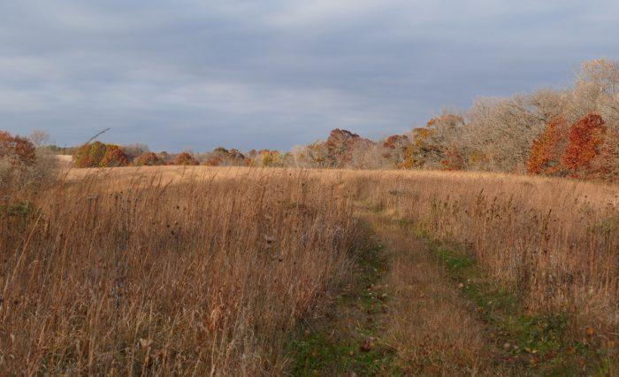 buffalo-ridge-prairie-2